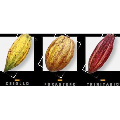 Mapa de sabores del cacao