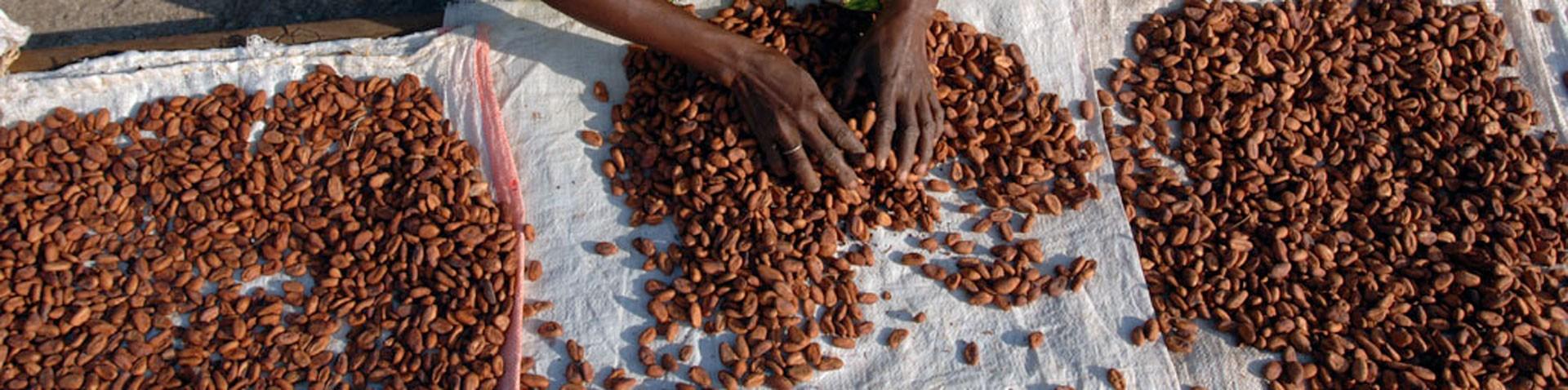 Los Productores de cacao, los Consumidores de chocolate.