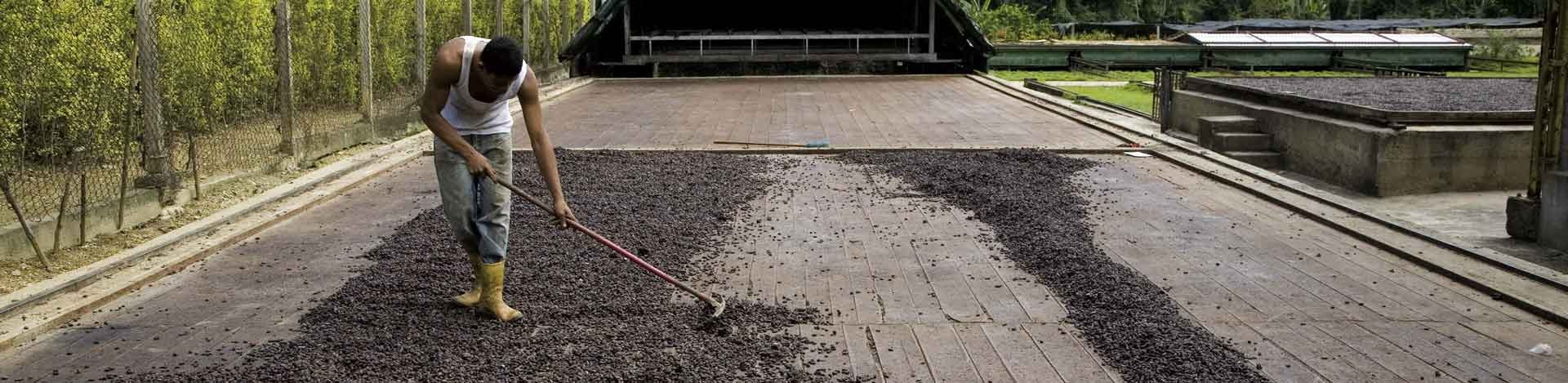 Propiedades del Cacao